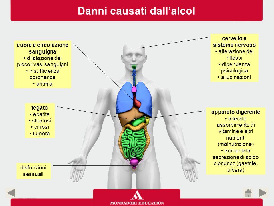 fegato epatite steatosi cirrosi tumore apparato digerente alterato assorbimento di vitamine e altri nutrienti (malnutrizione) aumentata secrezione di