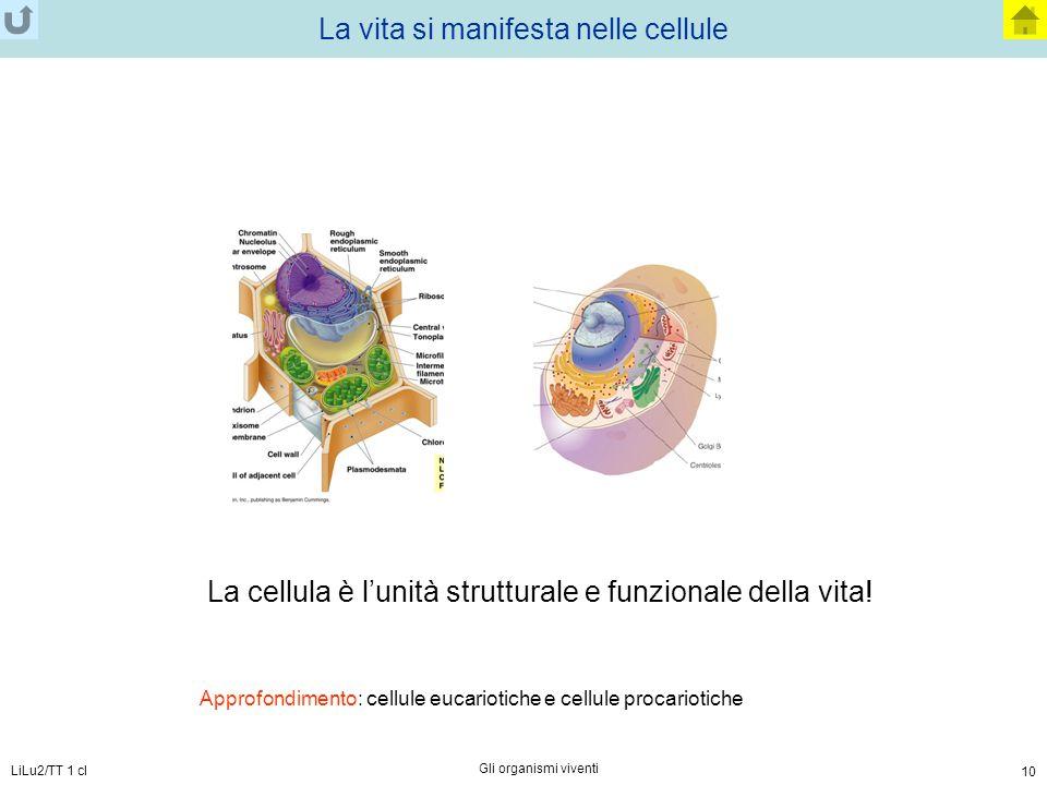 LiLu2/TT 1 cl Gli organismi viventi 10 La vita si manifesta nelle cellule La cellula è l'unità strutturale e funzionale della vita! Approfondimento: c