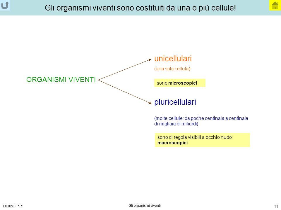 LiLu2/TT 1 cl Gli organismi viventi 11 Gli organismi viventi sono costituiti da una o più cellule! ORGANISMI VIVENTI unicellulari (una sola cellula) p