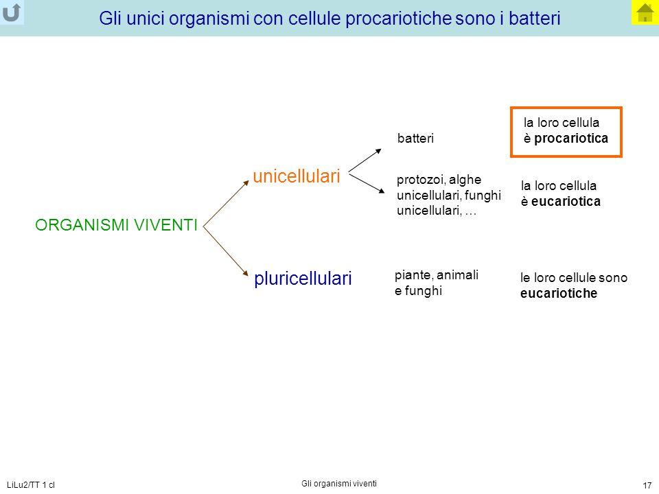 LiLu2/TT 1 cl Gli organismi viventi 17 Gli unici organismi con cellule procariotiche sono i batteri ORGANISMI VIVENTI unicellulari pluricellulari le l