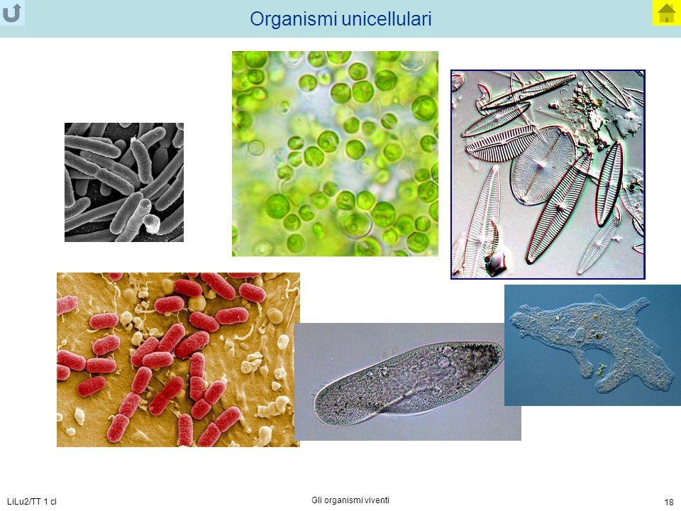 LiLu2/TT 1 cl Gli organismi viventi 18 Organismi unicellulari