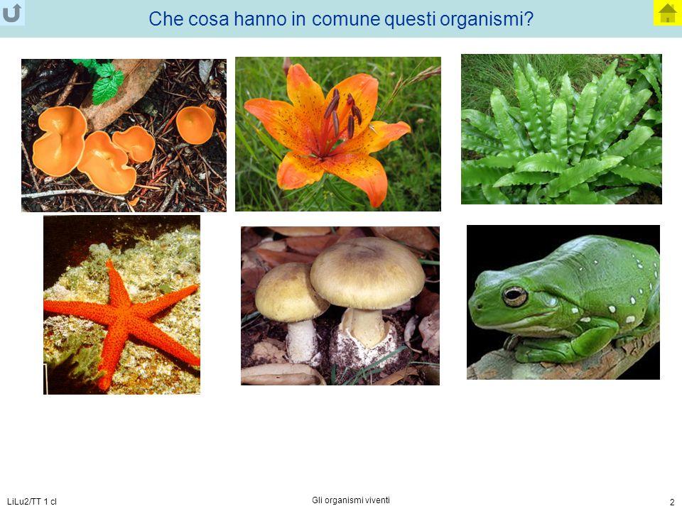 LiLu2/TT 1 cl Gli organismi viventi 2 Che cosa hanno in comune questi organismi?