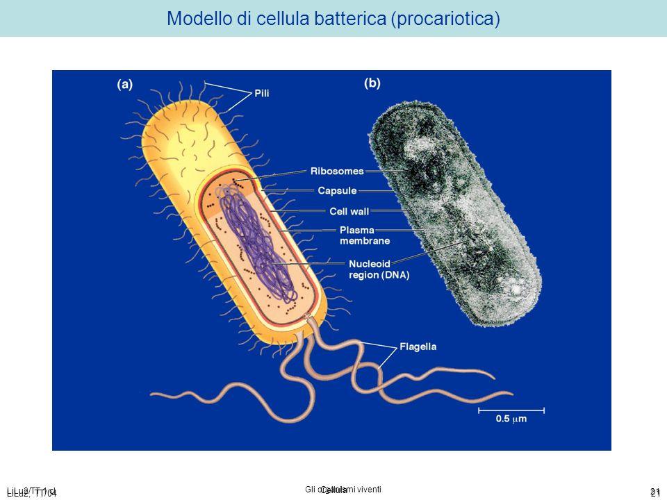 LiLu2/TT 1 cl Gli organismi viventi 21 LiLu2, TT/04 Cellula 21 Modello di cellula batterica (procariotica)