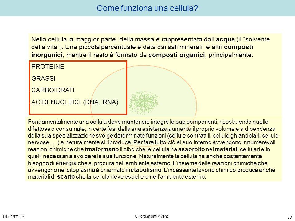 """LiLu2/TT 1 cl Gli organismi viventi 23 Come funziona una cellula? Nella cellula la maggior parte della massa è rappresentata dall'acqua (il """"solvente"""