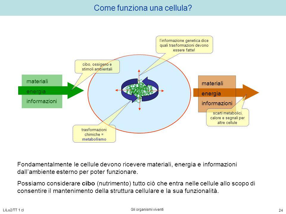 LiLu2/TT 1 cl Gli organismi viventi 24 materiali energia informazioni Come funziona una cellula? cibo, ossigeno e stimoli ambientali materiali energia
