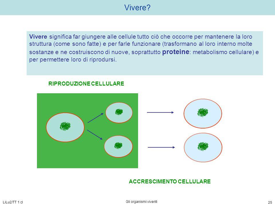 LiLu2/TT 1 cl Gli organismi viventi 25 Vivere? Vivere significa far giungere alle cellule tutto ciò che occorre per mantenere la loro struttura (come