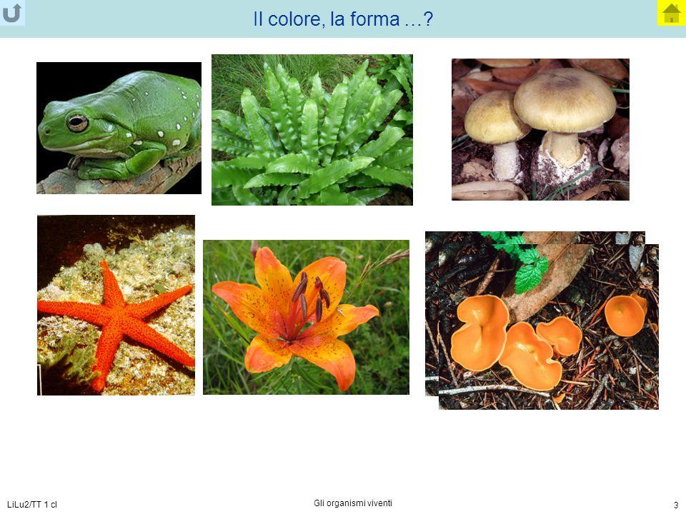 LiLu2/TT 1 cl Gli organismi viventi 3 Il colore, la forma …?