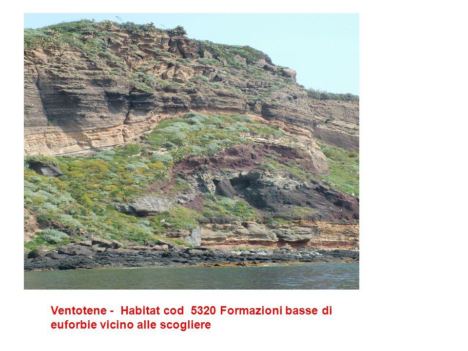 Ventotene - Habitat cod 5320 Formazioni basse di euforbie vicino alle scogliere
