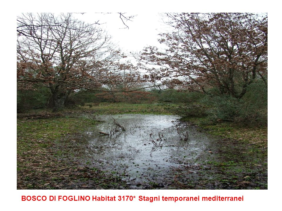 Habitat 1420 Praterie e fruticeti alofili Termo-atlantici (Sarcocornetea fruticosi)