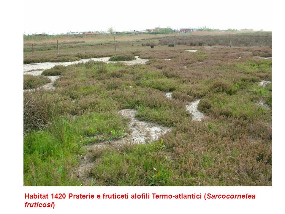 si ringrazia per parte delle foto Adriano Savoretti Riserva Naturale Monterano: habitat 3280 Fiumi mediterranei a flusso permanente