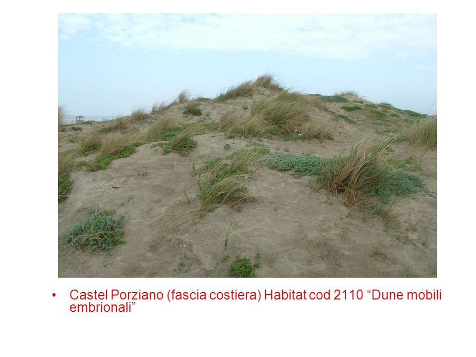 "Castel Porziano (fascia costiera) Habitat cod 2110 ""Dune mobili embrionali"""