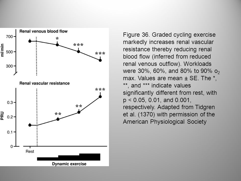 Figure 36. Graded cycling exercise markedly increases renal vascular resistance thereby reducing renal blood flow (inferred from reduced renal venous