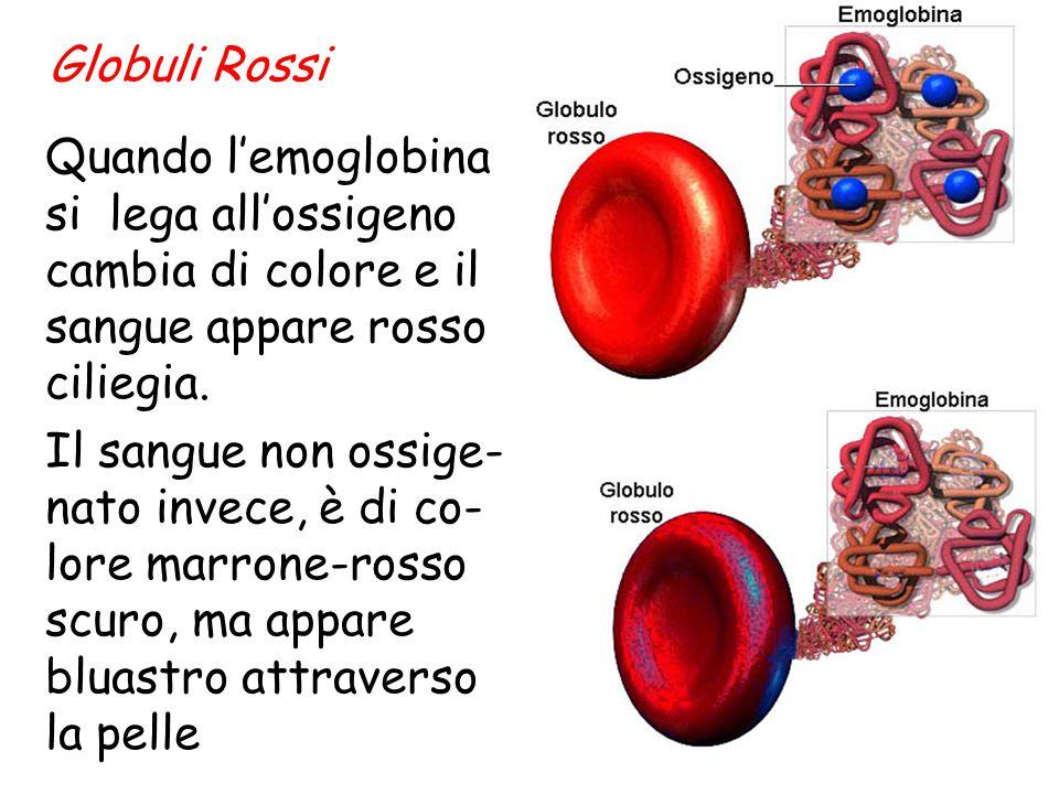 La molecola di emoglobina raccoglie l'ossigeno dove la concentrazione è elevata, come negli alveoli polmonari, e lo cede dove la concentrazione è bass