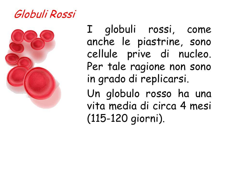 Quando l'emoglobina si lega all'ossigeno cambia di colore e il sangue appare rosso ciliegia. Il sangue non ossige- nato invece, è di co- lore marrone-