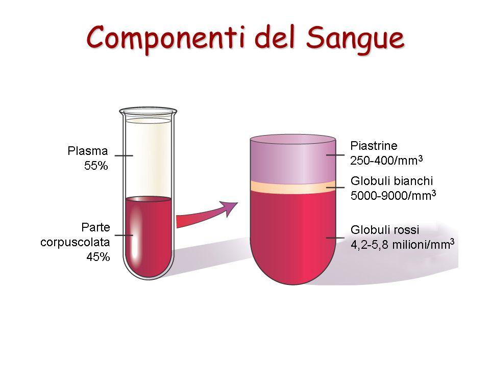 Componenti del Sangue Il sangue è formato da due principali componenti: 1.una parte corpuscolata formata da cellule specializzate (globuli rossi, glob