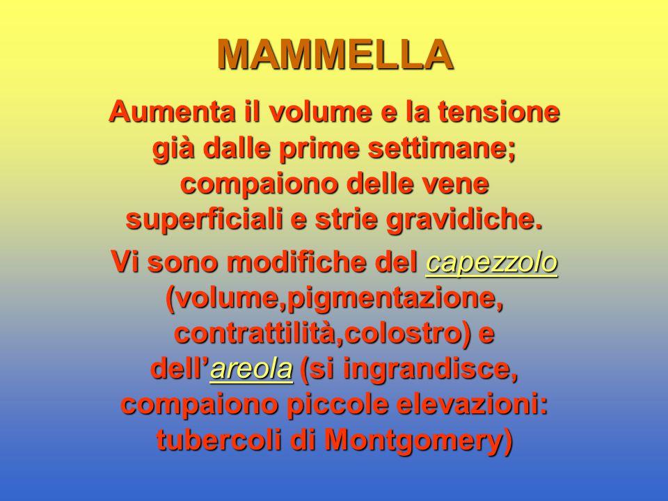 MAMMELLA Aumenta il volume e la tensione già dalle prime settimane; compaiono delle vene superficiali e strie gravidiche. Vi sono modifiche del capezz