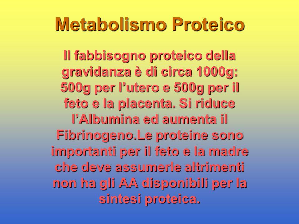 Metabolismo Proteico Il fabbisogno proteico della gravidanza è di circa 1000g: 500g per l'utero e 500g per il feto e la placenta. Si riduce l'Albumina