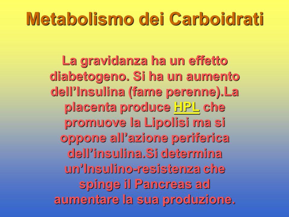 Metabolismo dei Carboidrati La gravidanza ha un effetto diabetogeno. Si ha un aumento dell'Insulina (fame perenne).La placenta produce HPL che promuov