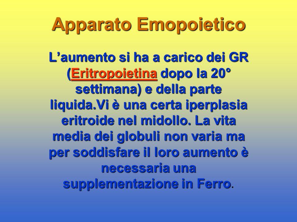 Apparato Emopoietico L'aumento si ha a carico dei GR (Eritropoietina dopo la 20° settimana) e della parte liquida.Vi è una certa iperplasia eritroide