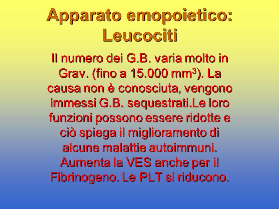Apparato emopoietico: Leucociti Il numero dei G.B. varia molto in Grav. (fino a 15.000 mm 3 ). La causa non è conosciuta, vengono immessi G.B. sequest