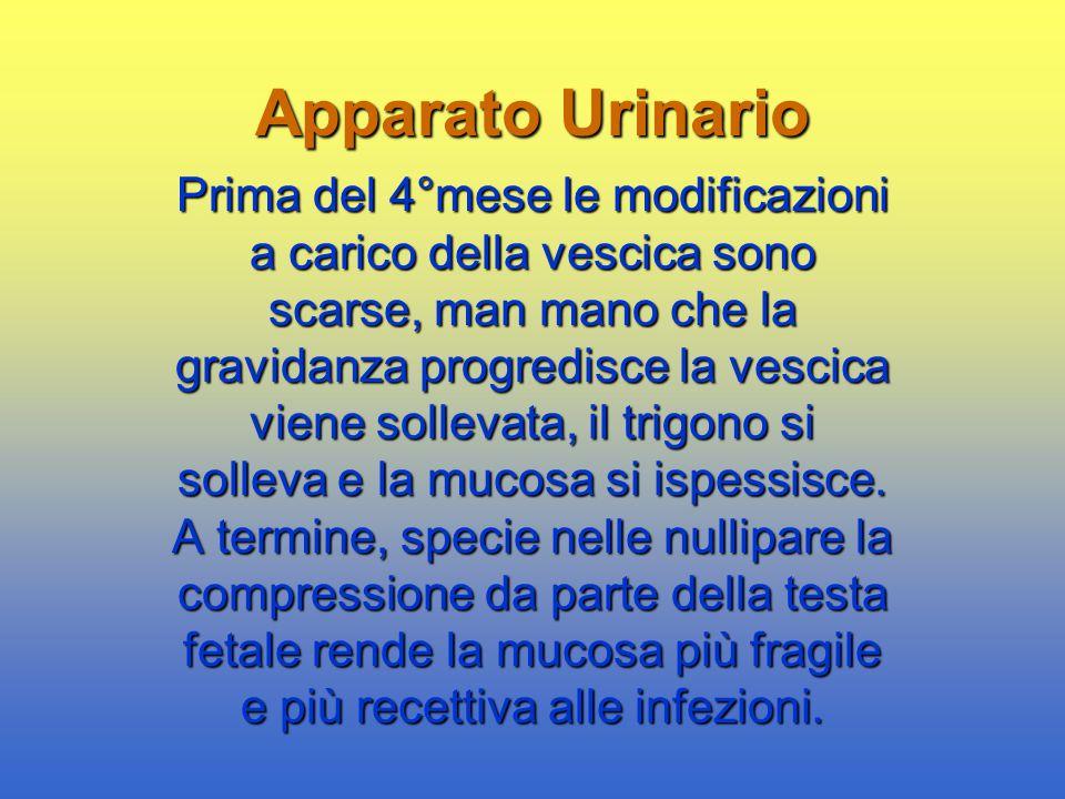 Apparato Urinario Prima del 4°mese le modificazioni a carico della vescica sono scarse, man mano che la gravidanza progredisce la vescica viene sollev