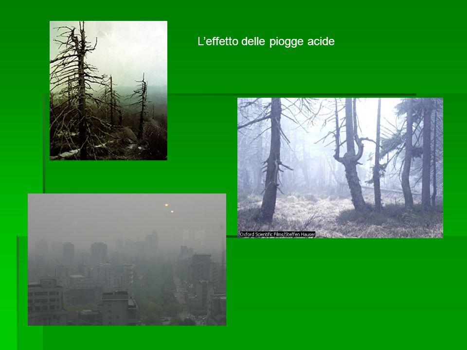 Le piogge acide sono dovute ad alcuni gas,che si originano soprattutto dalla combustione del carbone o del petrolio e dei suoi derivati.