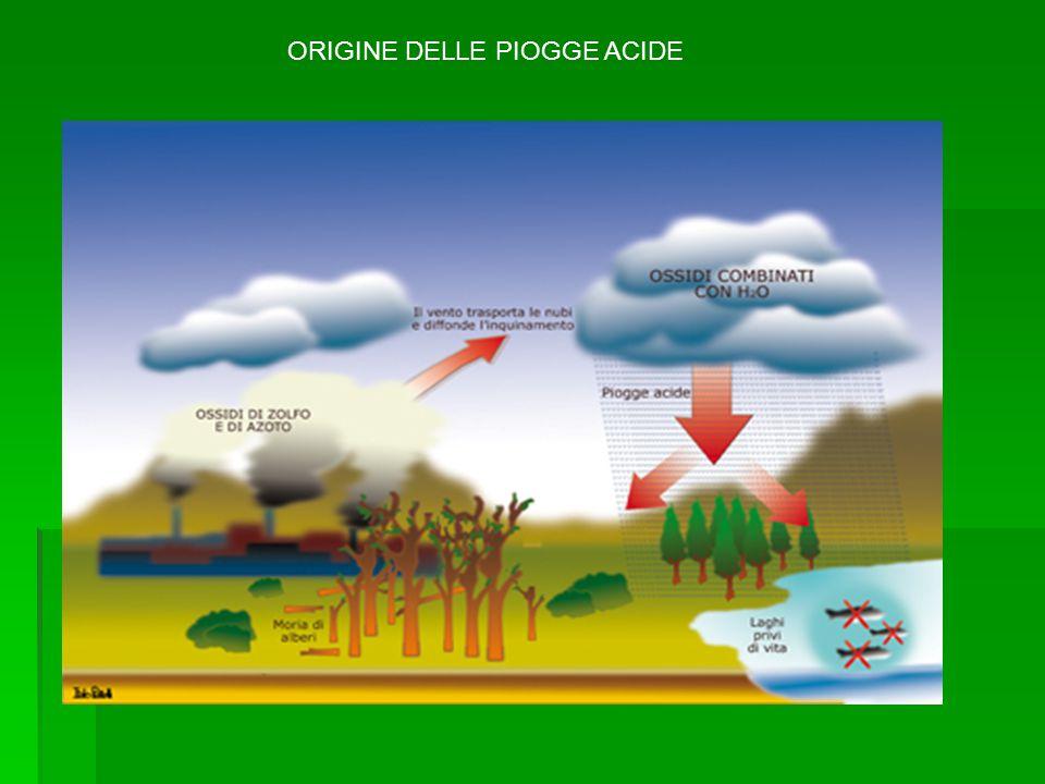 Le piogge acide causano danni soprattutto alla vegetazione.