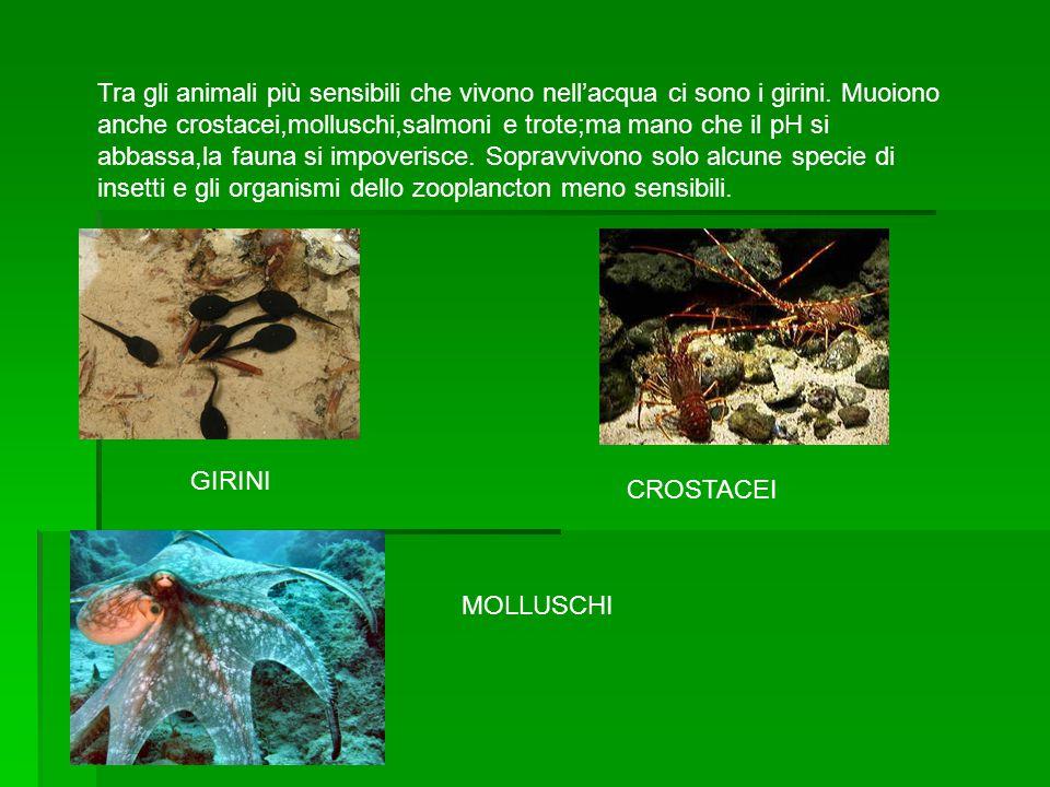 Tra gli animali più sensibili che vivono nell'acqua ci sono i girini.