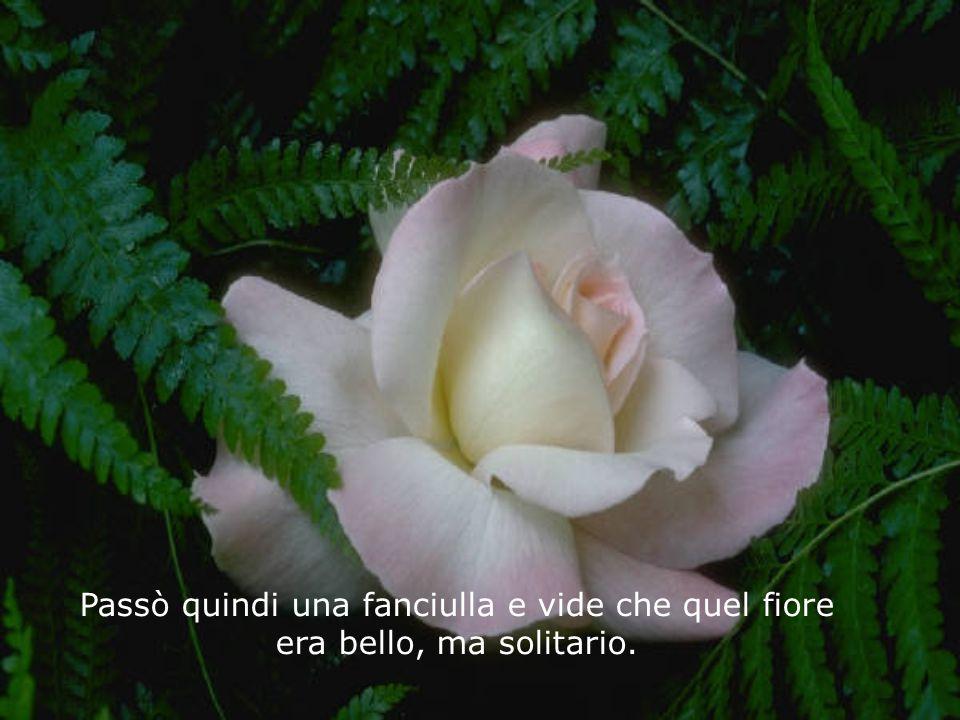 Passò quindi un uomo, vide il fiore, pensò alla bellezza di Dio, ma lo lasciò lì. Non volle coglierlo per non ucciderlo. Alcuni giorni dopo ci fu una