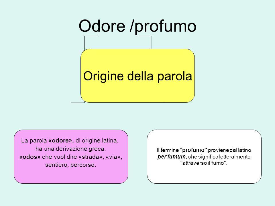 Odore /profumo Origine della parola La parola «odore», di origine latina, ha una derivazione greca, «odos» che vuol dire «strada», «via», sentiero, percorso.