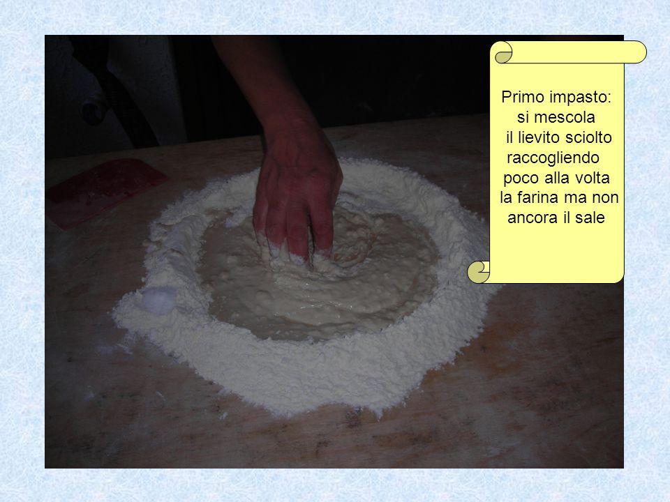 Primo impasto: si mescola il lievito sciolto raccogliendo poco alla volta la farina ma non ancora il sale