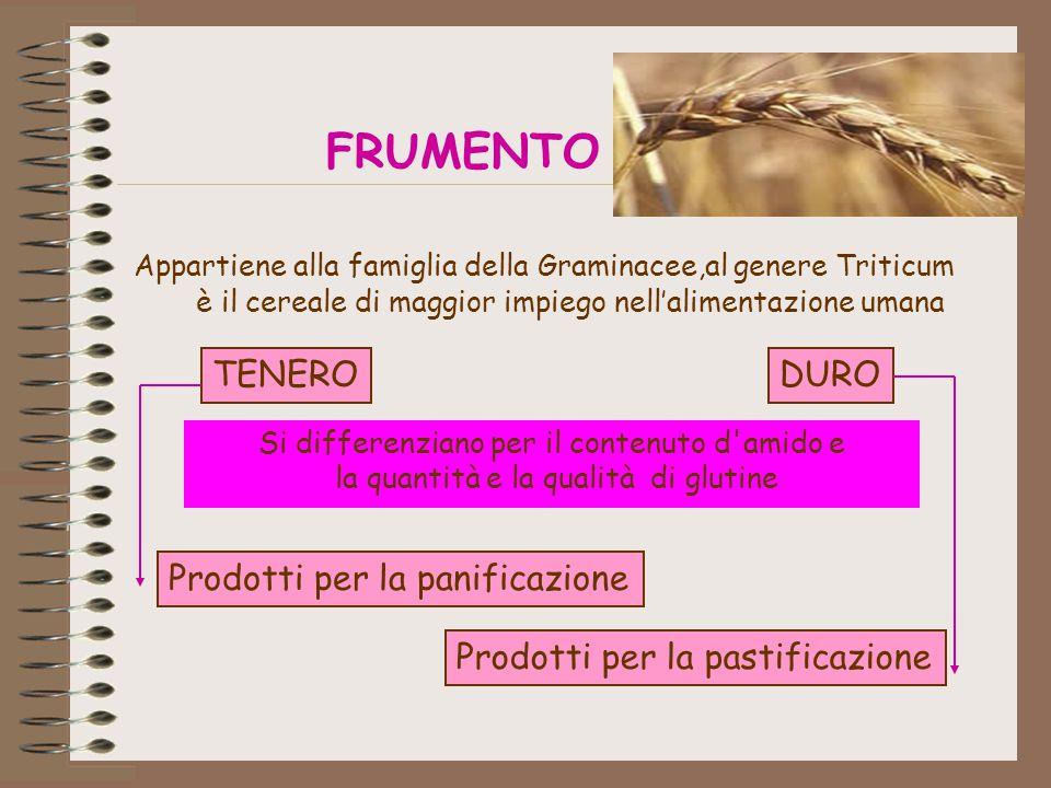 FRUMENTO Appartiene alla famiglia della Graminacee,al genere Triticum è il cereale di maggior impiego nell'alimentazione umana TENERODURO Prodotti per la panificazione Prodotti per la pastificazione Si differenziano per il contenuto d amido e la quantità e la qualità di glutine