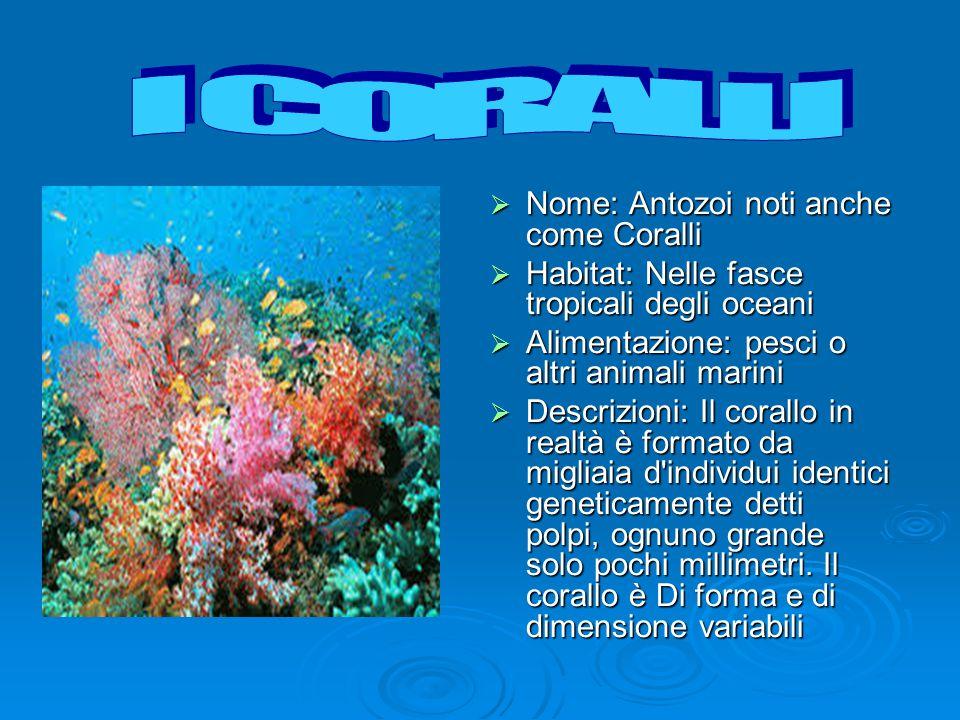  Nome: Antozoi noti anche come Coralli  Habitat: Nelle fasce tropicali degli oceani  Alimentazione: pesci o altri animali marini  Descrizioni: Il corallo in realtà è formato da migliaia d individui identici geneticamente detti polpi, ognuno grande solo pochi millimetri.