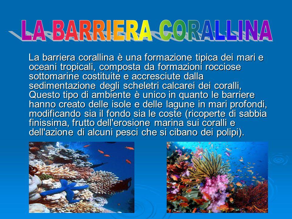 La barriera corallina è una formazione tipica dei mari e oceani tropicali, composta da formazioni rocciose sottomarine costituite e accresciute dalla sedimentazione degli scheletri calcarei dei coralli, Questo tipo di ambiente è unico in quanto le barriere hanno creato delle isole e delle lagune in mari profondi, modificando sia il fondo sia le coste (ricoperte di sabbia finissima, frutto dell erosione marina sui coralli e dell azione di alcuni pesci che si cibano dei polipi).