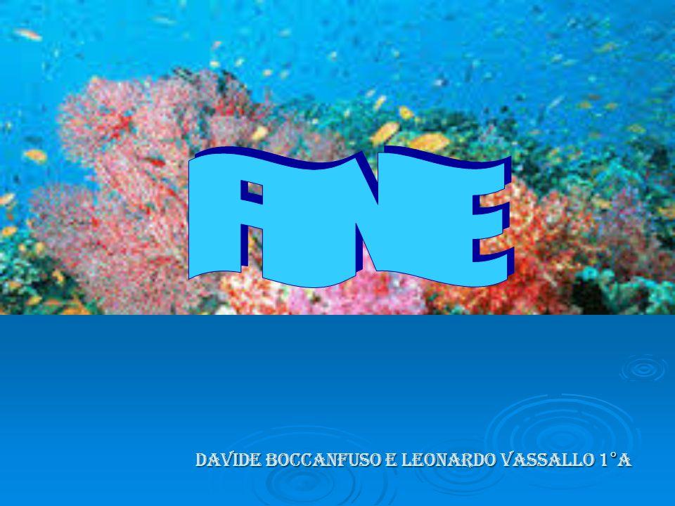 DAVIDE BOCCANFUSO E LEONARDO VASSALLO 1°a