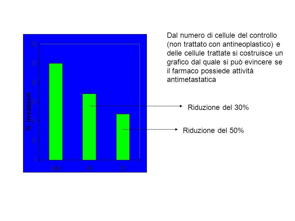 % invasion Dal numero di cellule del controllo (non trattato con antineoplastico) e delle cellule trattate si costruisce un grafico dal quale si può evincere se il farmaco possiede attività antimetastatica Riduzione del 30% Riduzione del 50%