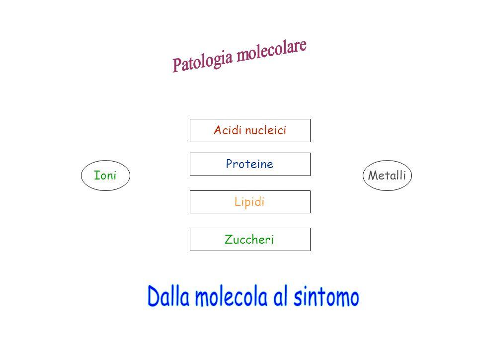 Acidi nucleici Proteine Lipidi Zuccheri IoniMetalli