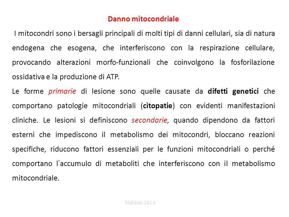 Danno mitocondriale I mitocondri sono i bersagli principali di molti tipi di danni cellulari, sia di natura endogena che esogena, che interferiscono con la respirazione cellulare, provocando alterazioni morfo-funzionali che coinvolgono la fosforilazione ossidativa e la produzione di ATP.
