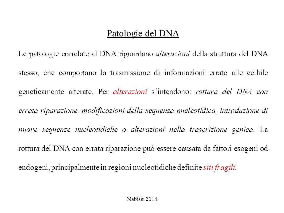 Patologie del DNA Le patologie correlate al DNA riguardano alterazioni della struttura del DNA stesso, che comportano la trasmissione di informazioni errate alle cellule geneticamente alterate.