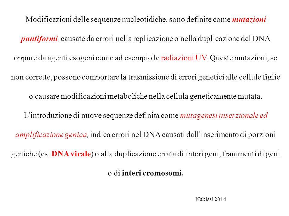 Modificazioni delle sequenze nucleotidiche, sono definite come mutazioni puntiformi, causate da errori nella replicazione o nella duplicazione del DNA oppure da agenti esogeni come ad esempio le radiazioni UV.