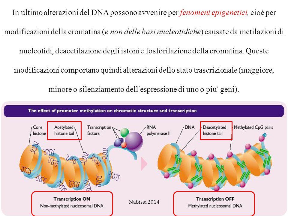 In ultimo alterazioni del DNA possono avvenire per fenomeni epigenetici, cioè per modificazioni della cromatina (e non delle basi nucleotidiche) causate da metilazioni di nucleotidi, deacetilazione degli istoni e fosforilazione della cromatina.