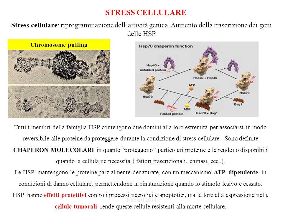 STRESS CELLULARE Stress cellulare: riprogrammazione dell'attività genica.