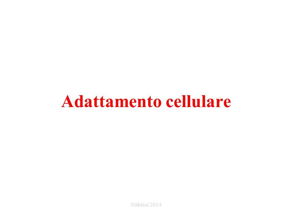 Adattamento cellulare Nabissi 2014