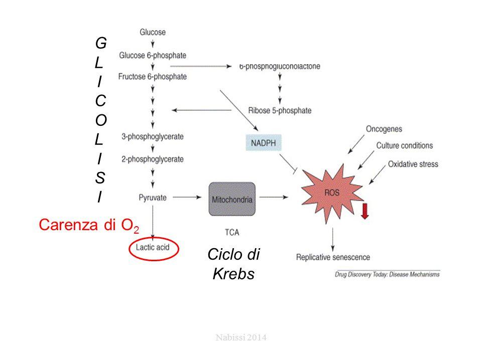GLICOLISIGLICOLISI Carenza di O 2 Ciclo di Krebs