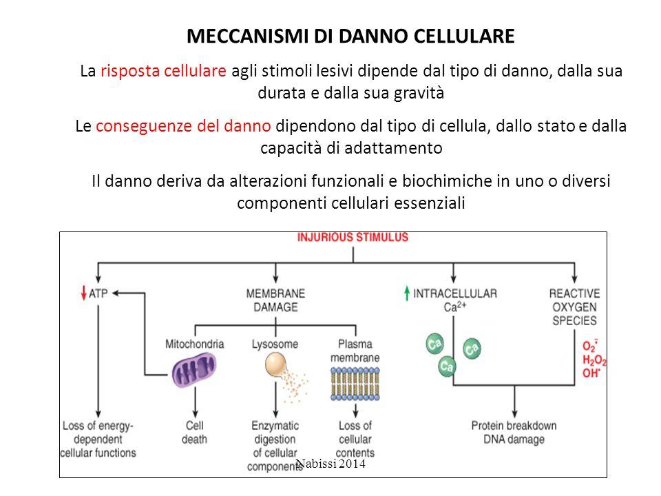 MECCANISMI DI DANNO CELLULARE La risposta cellulare agli stimoli lesivi dipende dal tipo di danno, dalla sua durata e dalla sua gravità Le conseguenze