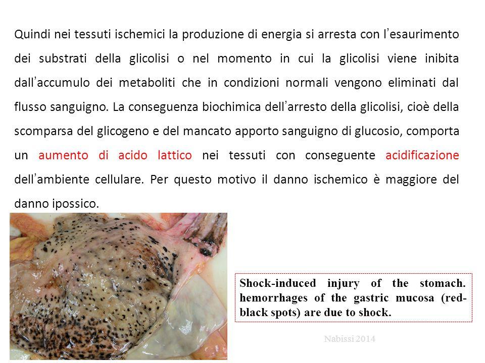 Quindi nei tessuti ischemici la produzione di energia si arresta con l'esaurimento dei substrati della glicolisi o nel momento in cui la glicolisi vie
