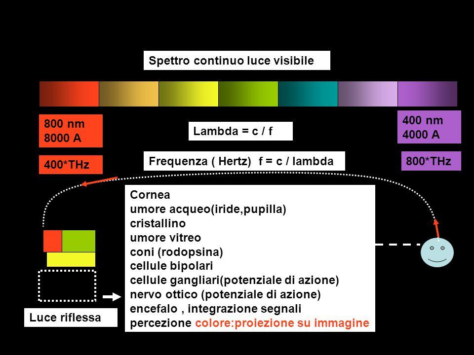 800 nm 8000 A 400 nm 4000 A Lambda = c / f Frequenza ( Hertz) f = c / lambda 400*THz 800*THz Spettro continuo luce visibile Luce riflessa Daltonico : difettoso nei recettori per colore rosso, verde riceve tutta la luce, ma non distingue il rosso da verde perché manca del recettore necessario:
