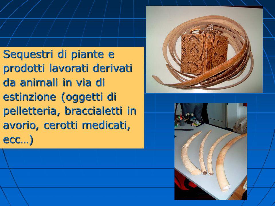 Sequestri di piante e prodotti lavorati derivati da animali in via di estinzione (oggetti di pelletteria, braccialetti in avorio, cerotti medicati, ec