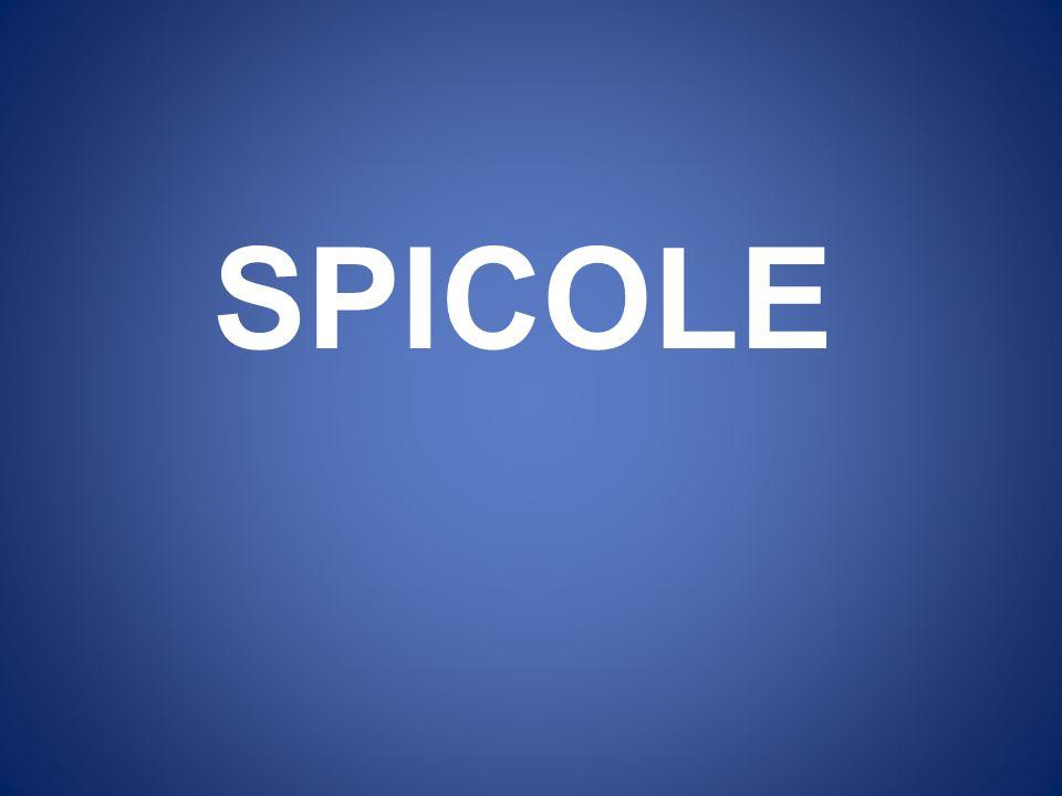 SPICOLE