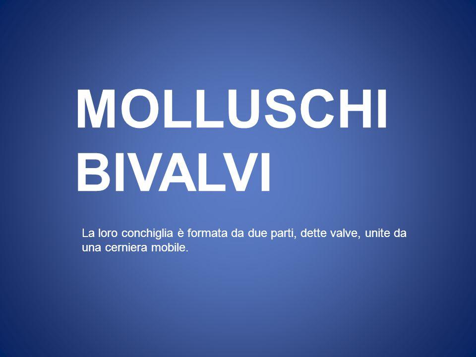 MOLLUSCHI BIVALVI La loro conchiglia è formata da due parti, dette valve, unite da una cerniera mobile.